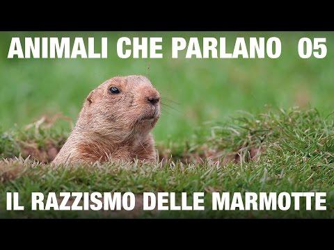 ANIMALI CHE PARLANO – Il razzismo delle marmotte