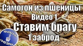 Самогон из пшеницы. Видео 1 - Ставим брагу, 1 заброд.(В этом видео рассказано, как правильно приготовить пшеницу, как поставить закваску, сколько добавлять саха..., 2016-04-21T09:30:01.000Z)