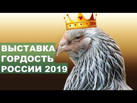 САМЫЕ КРАСИВЫЕ КУРЫ! ВЫСТАВКА ГОРДОСТЬ РОССИИ 2019 - ПОЛНЫЙ ОТЧЕТ.