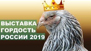 Самые Красивые Куры! Выставка Гордость России 2019 - Полный Отчет