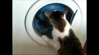 Кот и стиральная машина / The Cat and the washing machine
