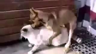 Бодрый секс котика с собачкой!