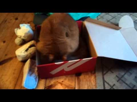 Simba loves his new Fitflop box