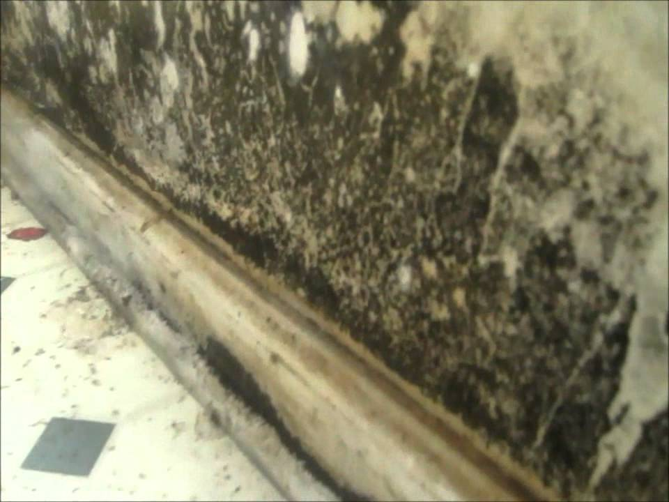 Atlanta Mold Testing Services Finds Black From Water Heater Leak