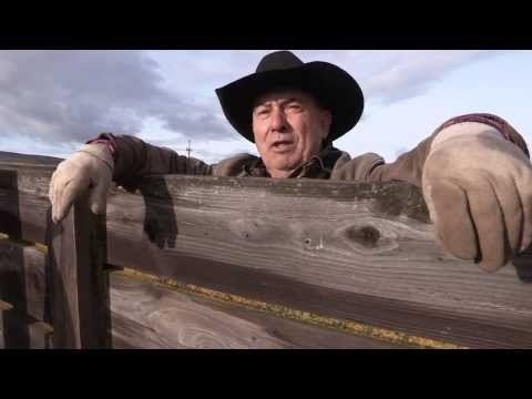 Cowboys and Cattle   EPISODE 10
