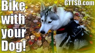 Bike With Your Dog | Siberian Husky Runs With Bike!