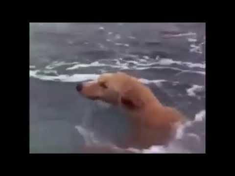 Dog ka filing