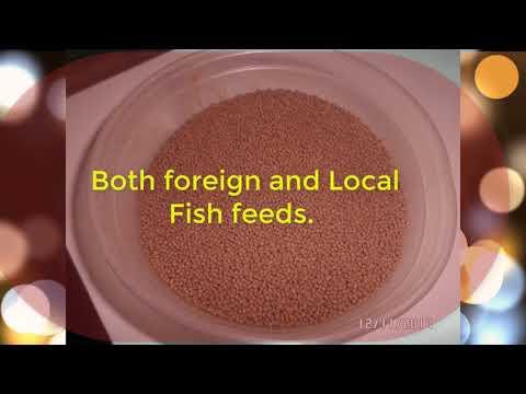 TYPES OF CAT FISH FEEDS IN NIGERIA