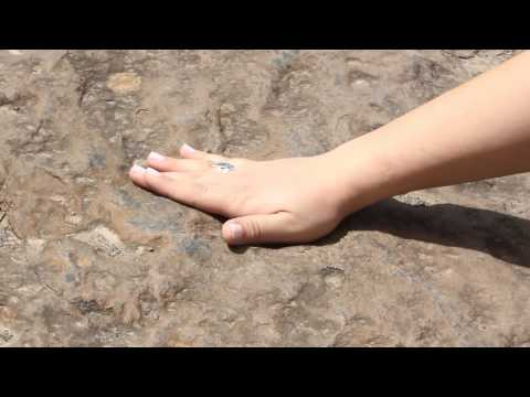 Paradise City Press: Holyoke Dinosaur Tracks Show Prehistoric History