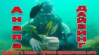 Дайвинг в Анапе. Подводная жизнь в Черном Море 89996057341