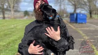 Quinn | 8 mo Standard Schnauzer | Best Trained Dogs of OR | Portland OffLeash K9 Training