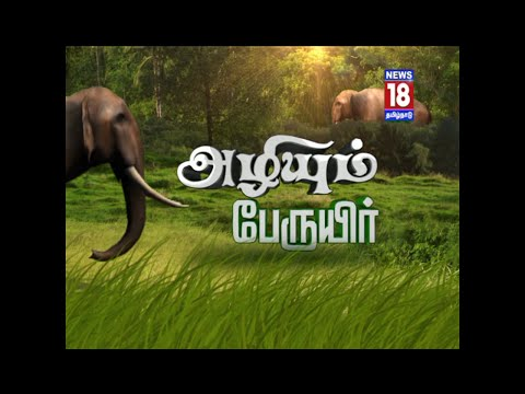 Azhiyum Peruyir | World Elephant Day Special | News18 Tamil Nadu