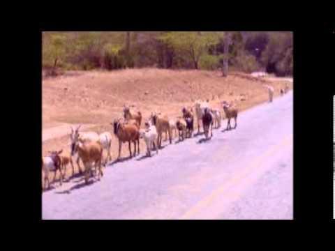 Cuban Farm Animals