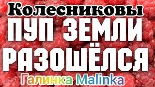 Колесниковы /Пуп земли разошелся /Обзор Влогов /