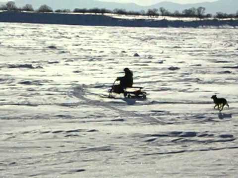 Как сделать снегоход из ижа фото 500