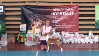 Басенджи. Региональная выставка собак в г. Псков 1.10.2016