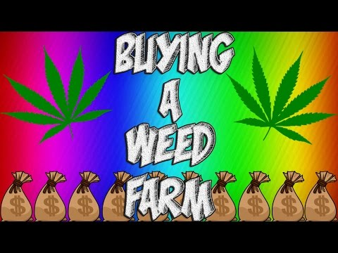 gta 5 online buying a weed farm buying 6600000 office space maze