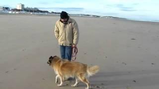 Grizzemis op het strand van Calais