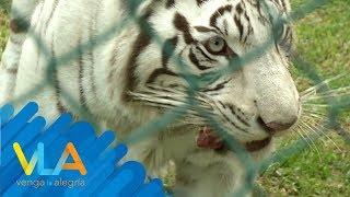 Enriquecimiento animal: ¡Juguetes para animales del zoológico!