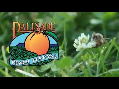 Palisade Peach Festival 2020 The Palisade Peach Festival | Peaches, Music, Fun!