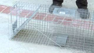 How To Build A Squirrel Trap