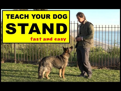 Teach Your Dog to STAND - Dog Training Video - Robert Cabral - the STAND Command