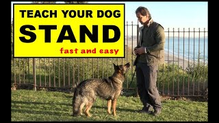 Teach Your Dog to STAND  Dog Training Video  Robert Cabral  the STAND Command