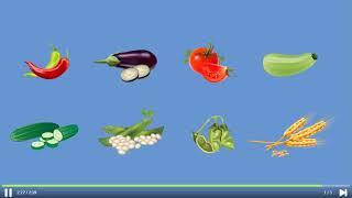 Okulistik - 3. Sınıf - Hayat Bilgisi - Meyve ve Sebzeler