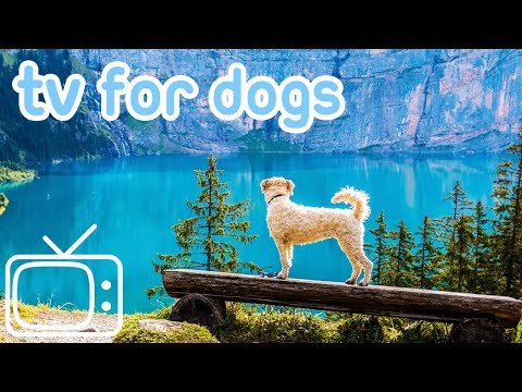 Dog TV! TV Entertainment for Dogs with Separation Anxiety! NEW YORK!