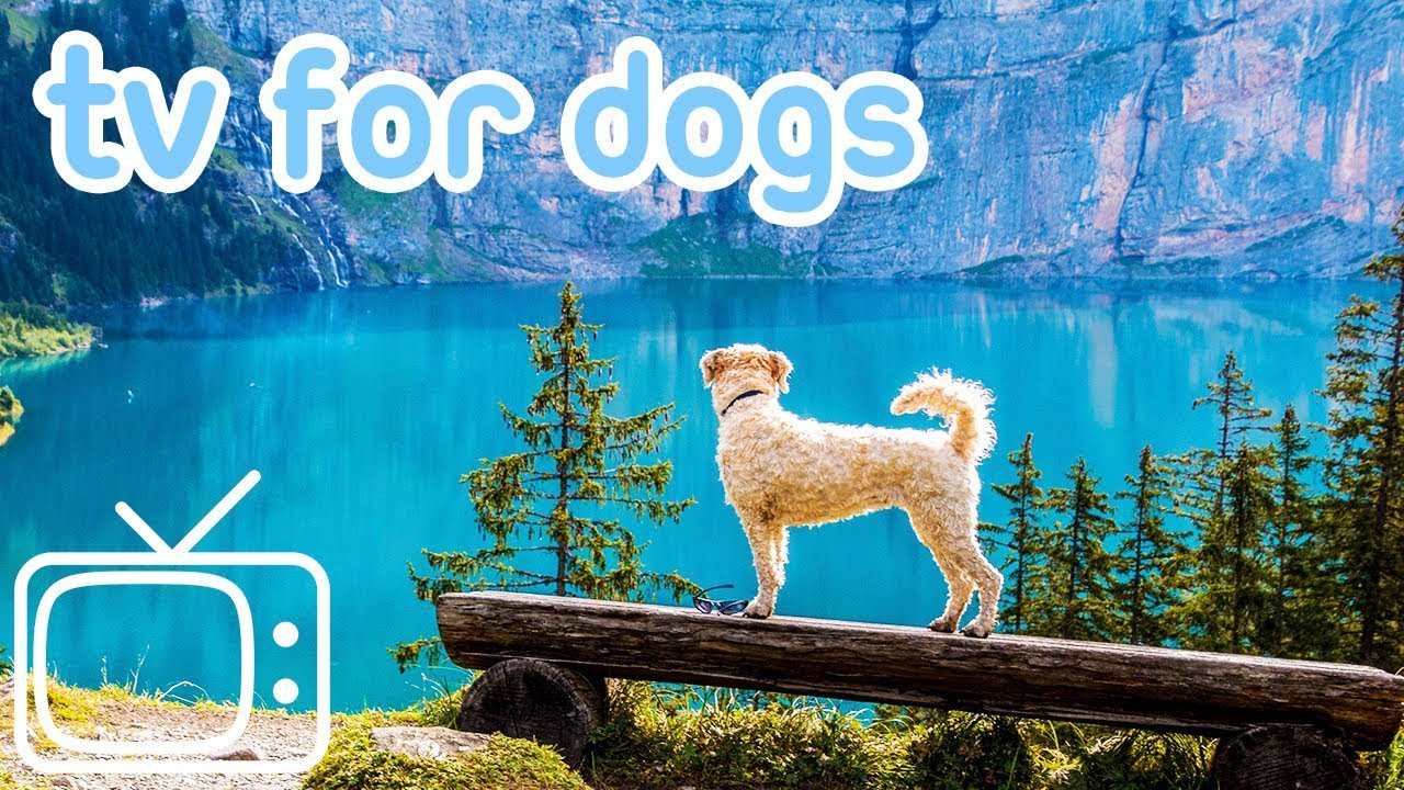 Download Dog TV! TV Entertainment for Dogs with Separation Anxiety! NEW YORK!