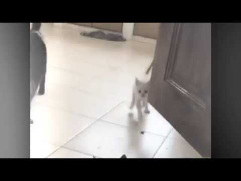 My Little Kitten And Cat Are Too Excited Playing And Hit The Door Sharp Edges. Funny Cat Video.
