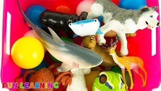 Learn Sea Animals and Wild Animals and Zoo Animals For Kids and Learn Colors