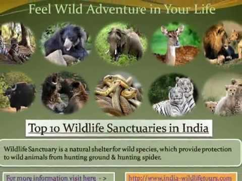 list of endangered species in wildlife sanctuary in india List of endangered species in wildlife sanctuary in india natural parks & wildlife sanctuary what are national parks and wildlife sanctuariesa tract of land declared by the national.