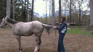 A Visual on How to Train a Horse to Backup by the Tail!