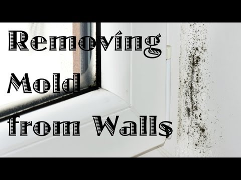 Removing Mold From Painted Walls And Ceiling | Thriftyfun