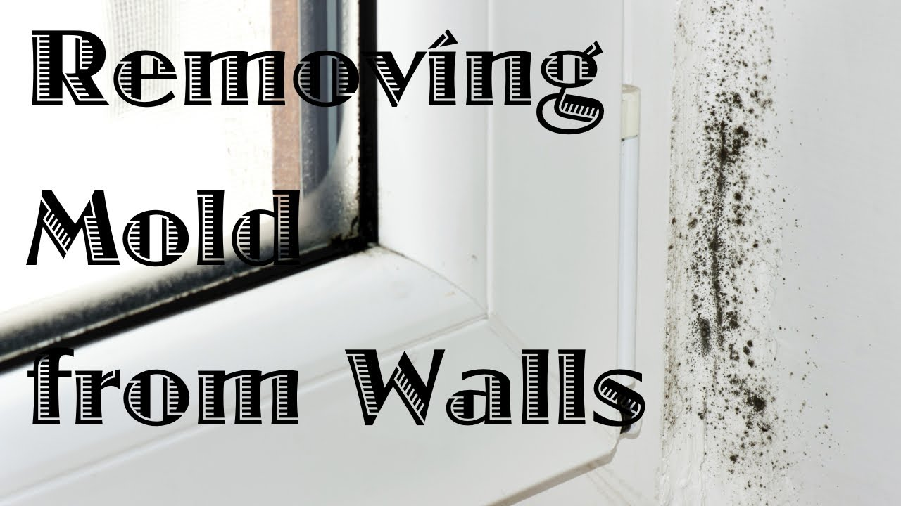 How To Get Rid Of Black Mold On Walls removing mold from walls - youtube