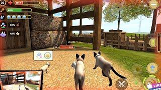 Cat Simulator 2020 #10 Cat Sim Online Game - Play with Cat Clan Pet Simulator 2020 Android Gameplay