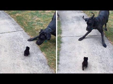djevojke bježe iz maca