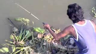 ตกปลาชะโดby เคนเด็กคลอง