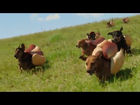 HEINZ Ketchup  2016  Hot Dog Commercial  the  'Wiener Stampede'