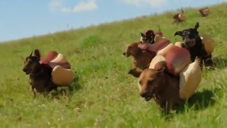 HEINZ Ketchup  2016  Hot Dog Commercial  the  'Wiener Stampede'