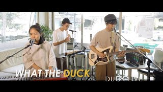 Duck Live 71 - ฮัม (Hum) - Plastic Plastic