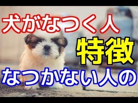 【愛犬のための知識】犬がなつく人、なつかない人の特徴【犬を知る】