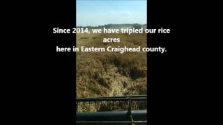 Rice Production in Arkansas