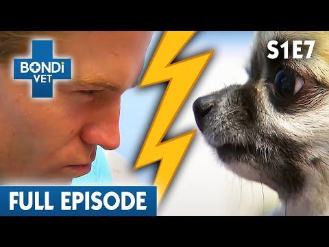 🐶 Feisty Dog   S01E07   Bondi Vet