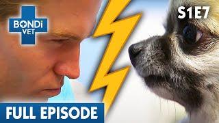 feisty-dog-s01e07-bondi-vet