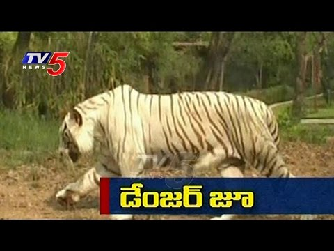 Danger Zoo | Animal Escapes from Zoo | Nehru Zoological Park | Hyderabad | TV5 News