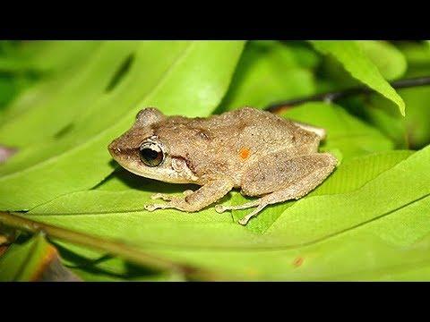INSIGHTS ON PBS HAWAI'I: Balancing the Endangered and Invasive Among Us