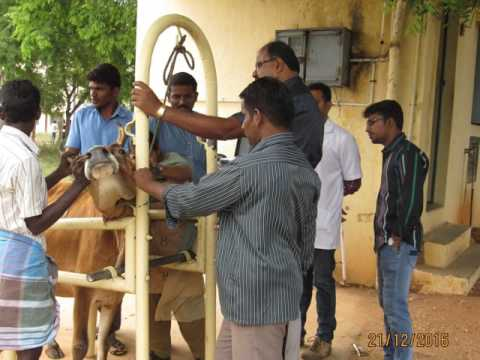 Mobile Veterinary Clinic at Arul Anandar College (Autonomous), Karumathur, Madurai