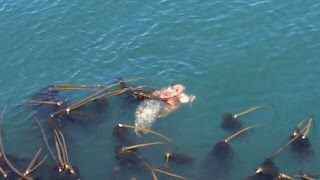 seal vs octopus fight for life food caught on camera